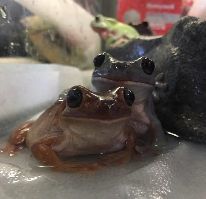 3-tree-frogs