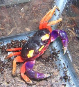 Silly Safaris Moon Crabs