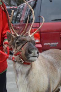 Noel the reinderr