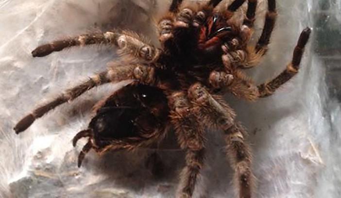 Silly Safaris LIVE Animal Shows with Arachnids